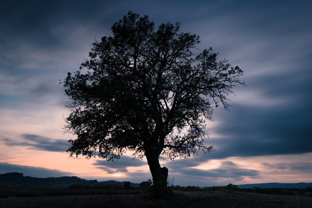 Arbre isolé au coucher de soleil