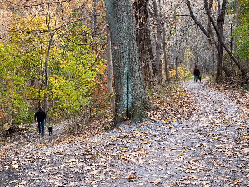 Frick Park in November