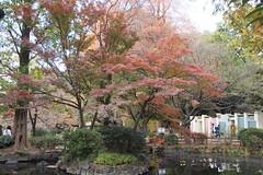 Fall Foliage at Inokashira Park