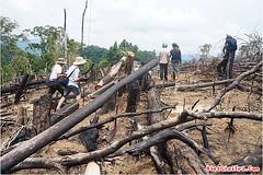 Hàng loạt lãnh đạo xã bị kỷ luật vụ phá rừng Tiên Lãnh