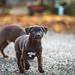 Puppy_3809