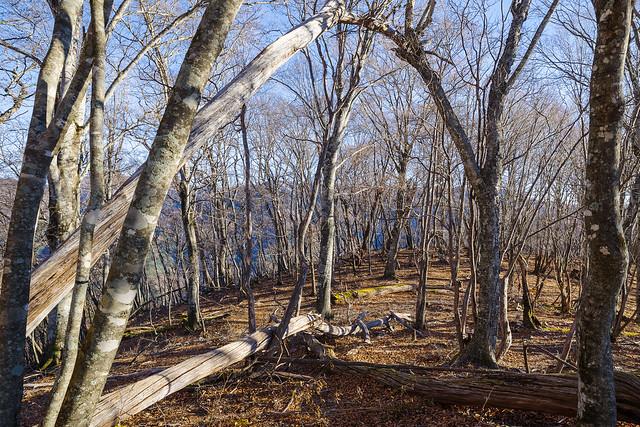 森のような広い尾根