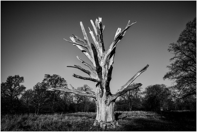 A Tree Study