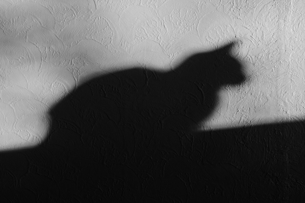 The shadow of our cat Trixie sitting in the picture window, cast on the dining room wall