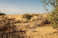 Desertification - Tombouctou (1 of 1)