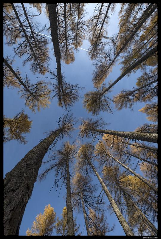 Upward Autumn Vision