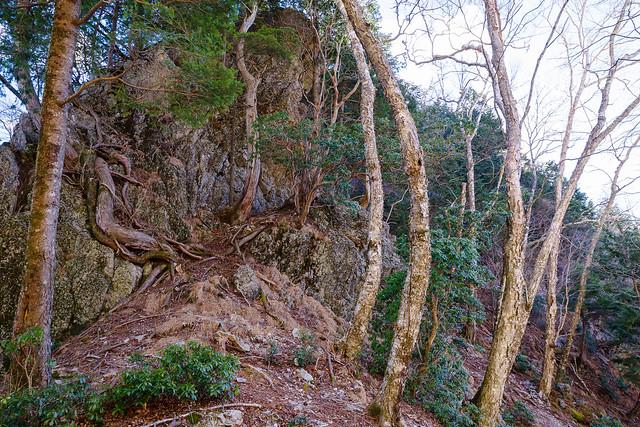 コルから登り始めると再び岩・・・