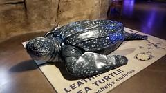 Sea turtle sclupture.