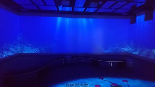 次の日、輪行勢と自走勢に分かれて佐田岬メロディーラインからの別府へ。当然自走組の僕は仮眠とってたらoooにちぎられソロに... これはどっかの道の駅のバーチャル水族館