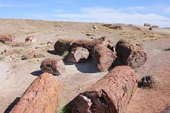 USA 2017 - 13.Tag, Albuquerque - Petrified Forest Nationalpark - Holbrook