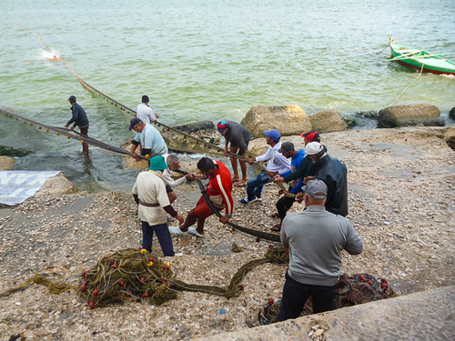 hauling in the nets