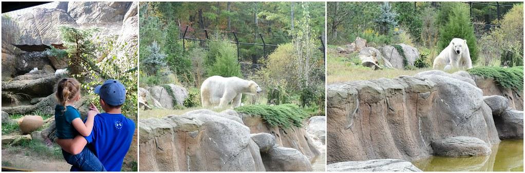 arctic fox and polar bear