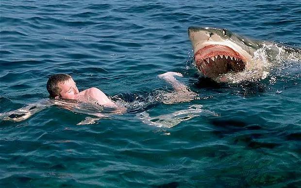 Акула напала на людину недалеко від Сан-Франциско