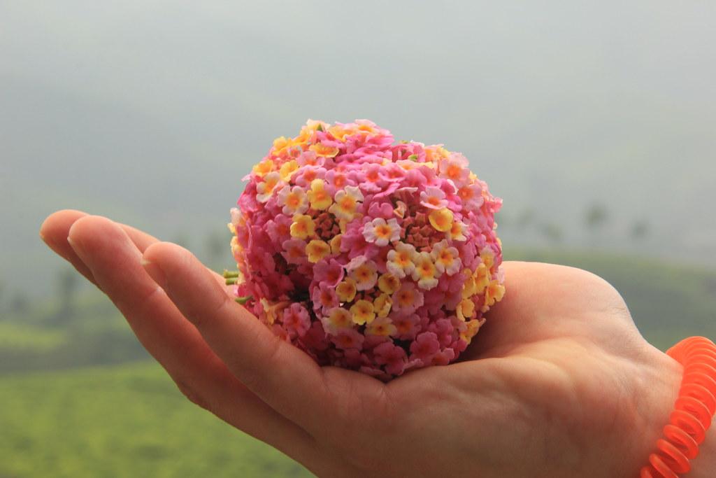 Reggie's flower-arranging skills, Kerala