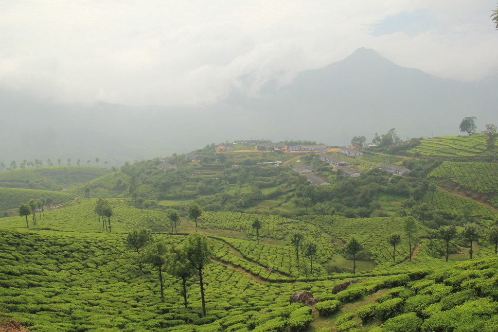 Villages dotted across the tea-covered hillsides