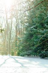 214 Pine Trees