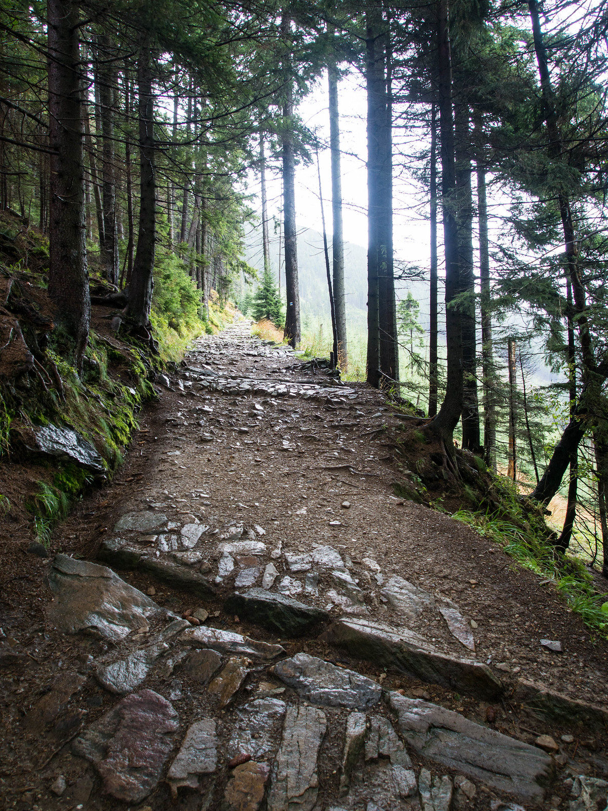 Hiking trail in Krkonose National Park, the Czech Republic