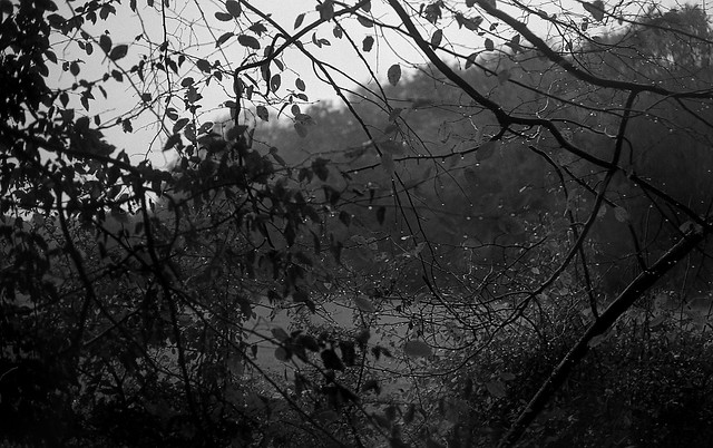 Drops and branches