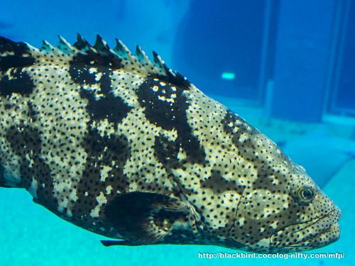 Aquarium 20171115 #02