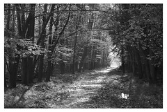 Latton Wood 4