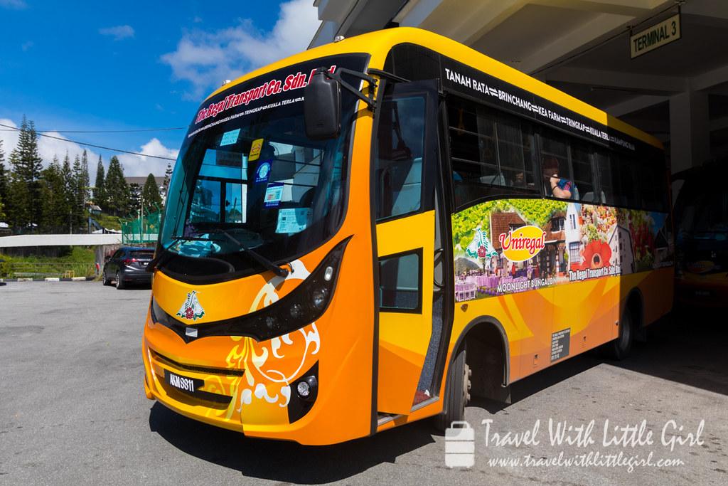 Local Public Bus