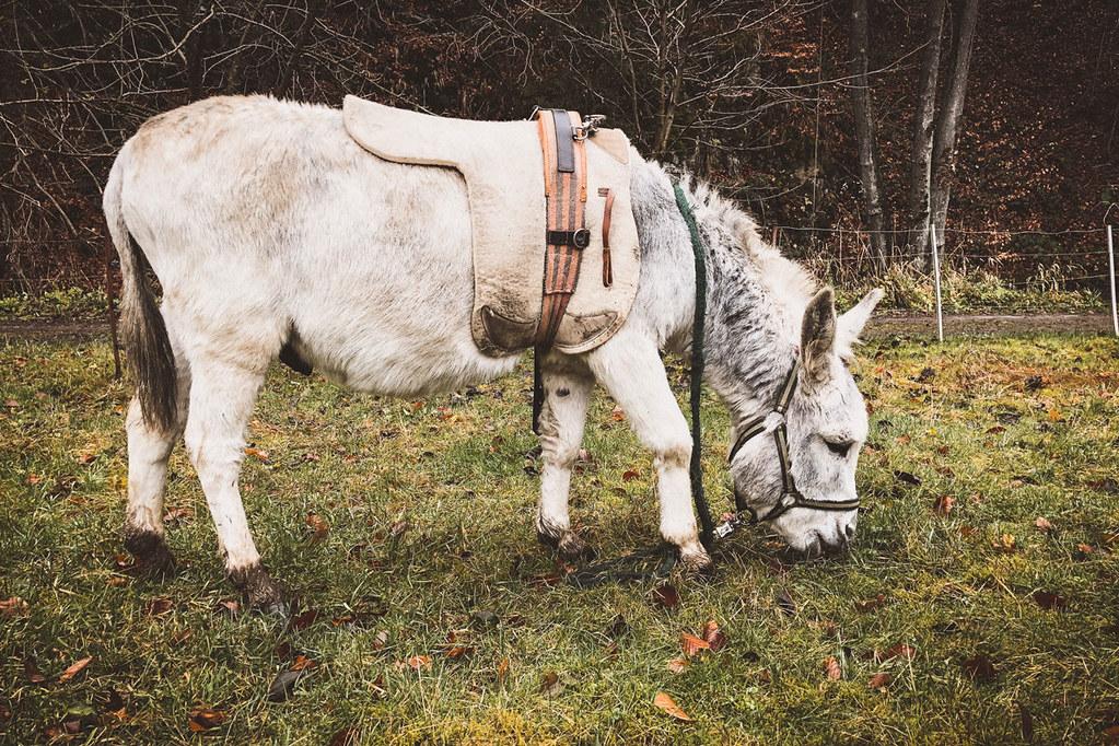 Eine Runde mit zwei Eseln