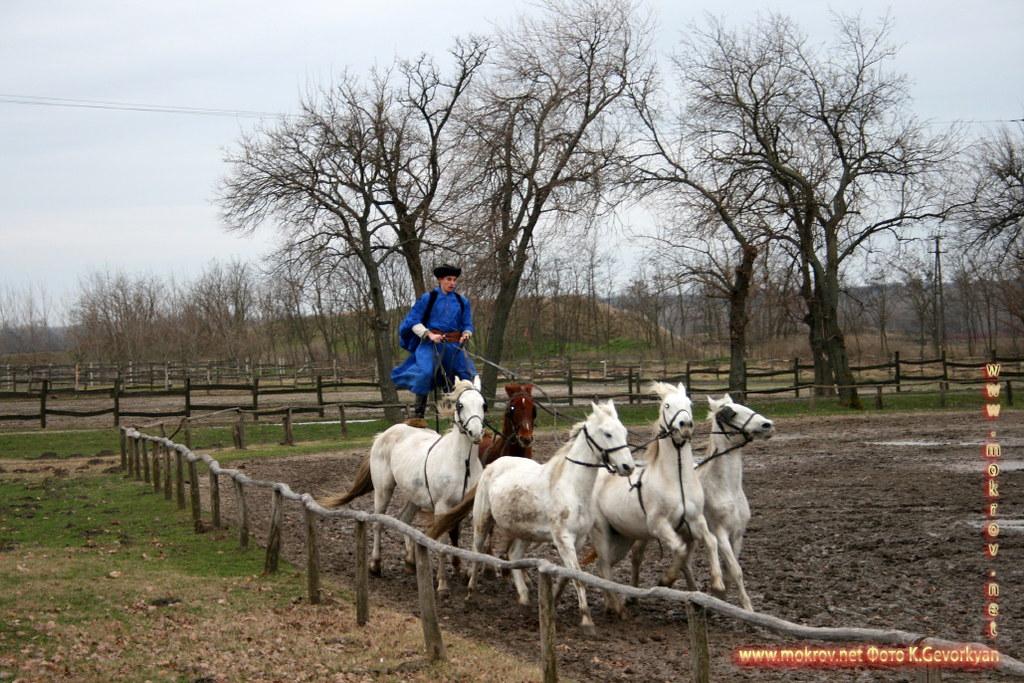 Пуста в Венгрии — обширный степной регион на северо-востоке Венгрии