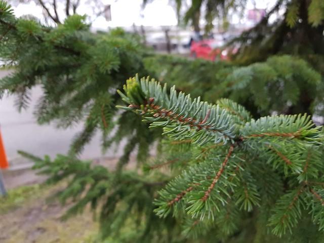 Puu - tuuline, päevane aeg ja ühtlane valgus