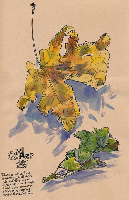 Sketchbook #109: Big Leaf Maple