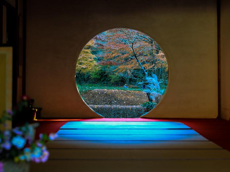 明月院 秋 鎌倉