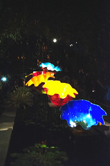 Chihuly Nights 10.26.2017-044
