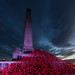 Plymouth Poppy Wave