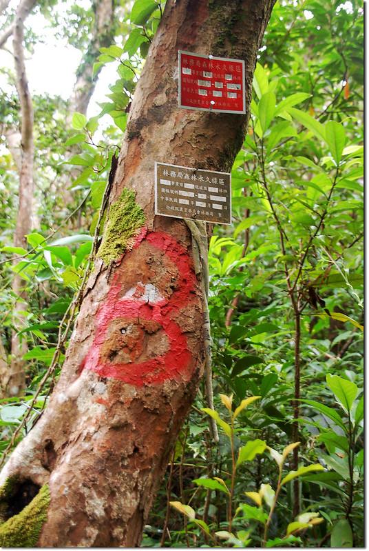 林務局森林永久樣區 2