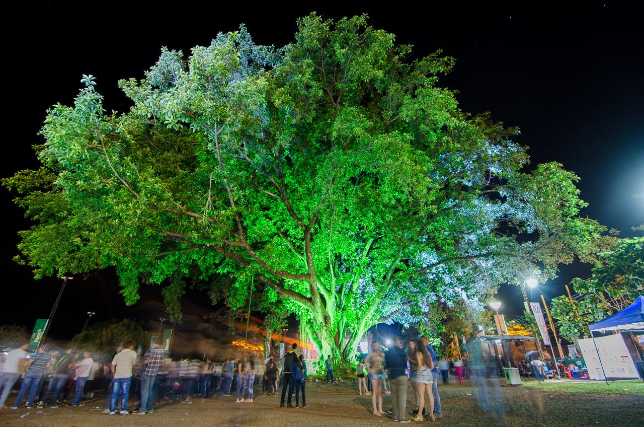 Un ícono del Club Alemán de Obligado es el frondoso árbol que vió nacer al club hace 44 años. (Elton Núñez).