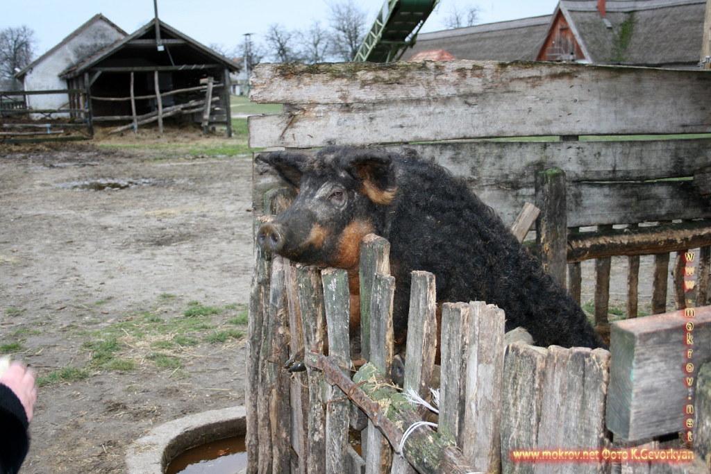 Конная Ферма Пуста — Венгрия фото достопримечательностей