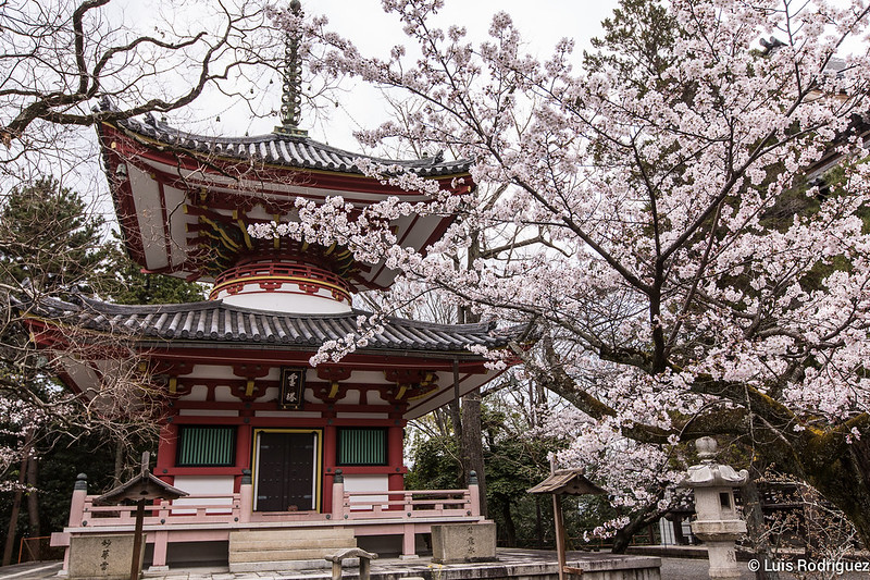 Chion-in-17