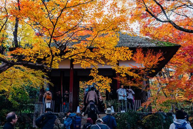 Kyoto_Jyojyakko-ji_03