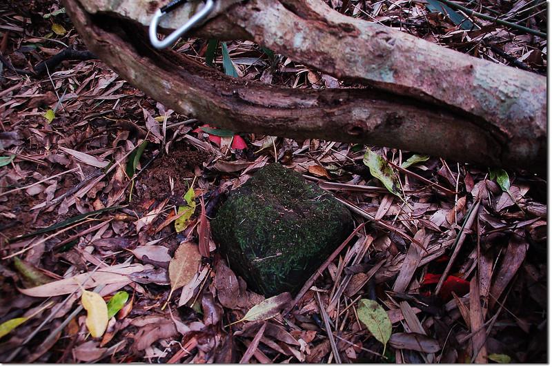 出風山補川(20)自然石森林三角點 2