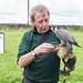 Falconry Day - Peregrine Falcon by ken_davis