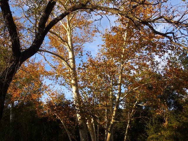 santa monica mounains in autumn