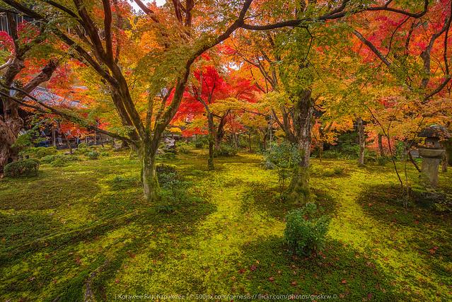 the Garden, Nikon D750, AF-S Nikkor 18-35mm f/3.5-4.5G ED