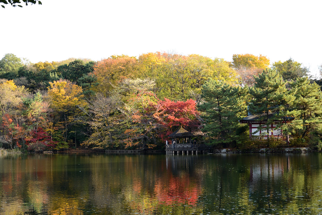 Shakujii park in autumn. 秋の石神井公園、三宝寺池