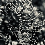 Flickr Friday - December Rain