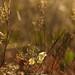 Small photo of Conciliabule en herbes