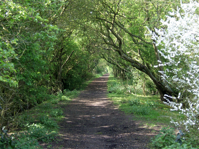 Footpath beside Mayland Creek
