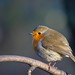 The Early Robin