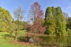 Le bout de l'étang de l'Orangerie et ses arbres rares