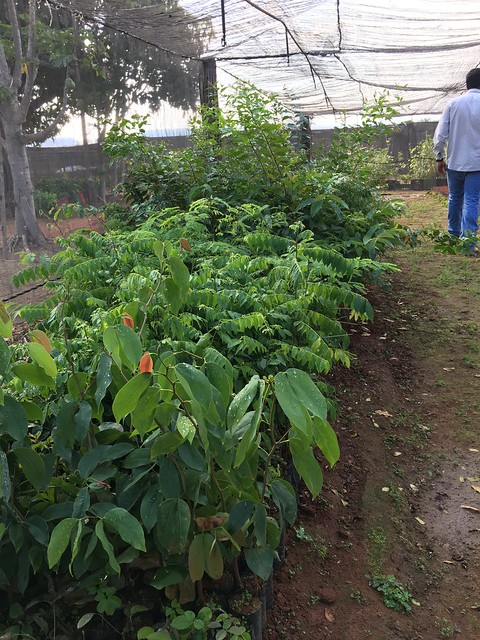 Nursery for Native plants