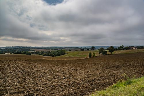 23-A l'horizon la forêt des landes de Gascogne