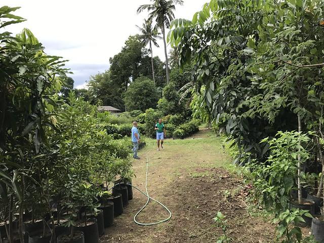 Talisay plant nursery